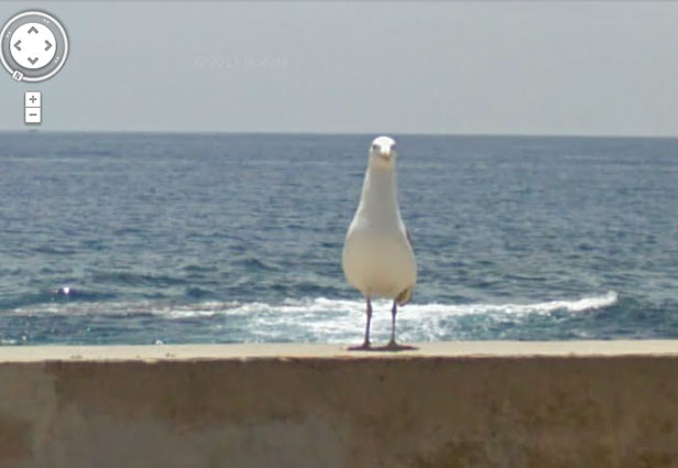 TechieApps-Google Earth and Google Street View pics-Hey, what are you looking at, Seagull!