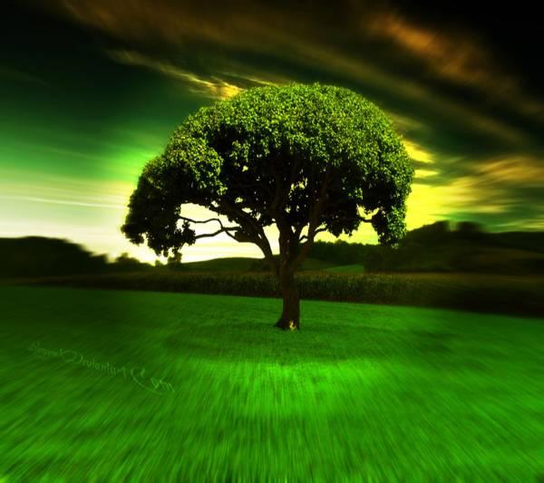 24. Mystical-Nature-Samsung-Galaxy-S4-Wallpaper
