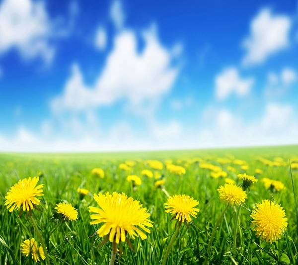 35. Spring-Flower-Field-Samsung-Galaxy-S4-Wallpaper