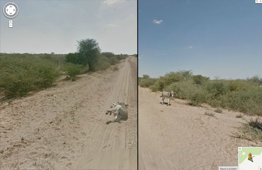 13. Did Google Street View Kill a Donkey